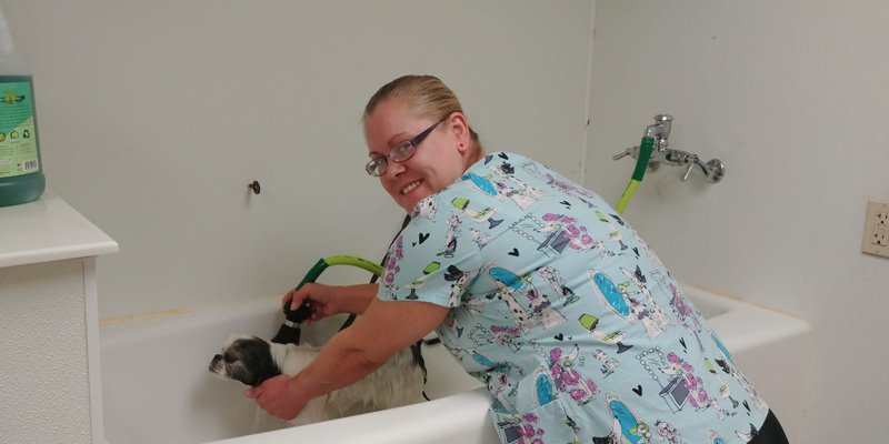 Pet Grooming in Cedar Rapids, IA